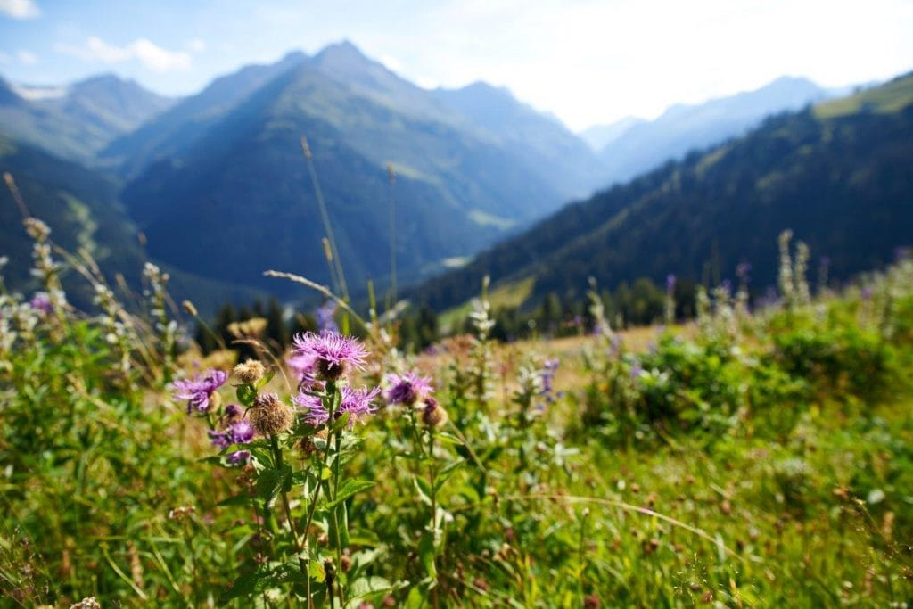 Berge Mountain Yoga Festival
